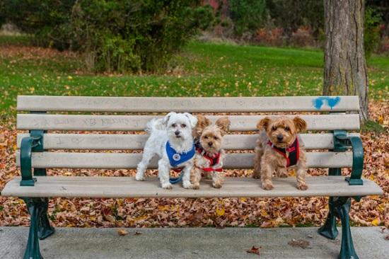 احتمال ورود تکنولوژی به مشکل فضولات سگها در تورنتو