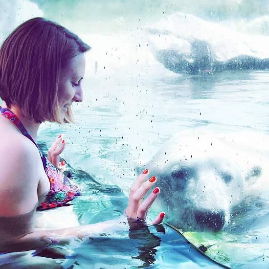 شنا در استخر خرس های قطبی