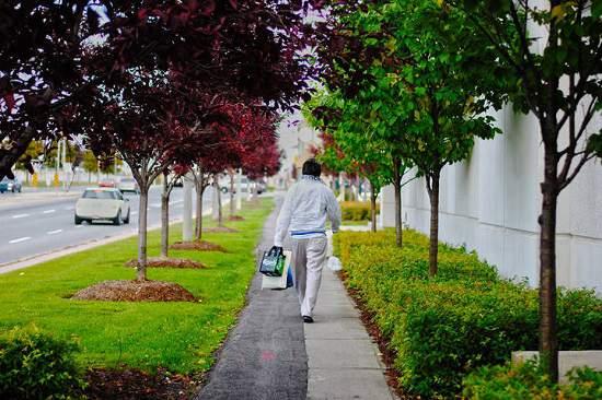 شهرداری تورنتو برای شما درخت رایگان می کارد