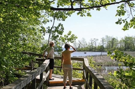 منطقه محافظت شده Rattray Marsh سی دقیقه تا تورنتو