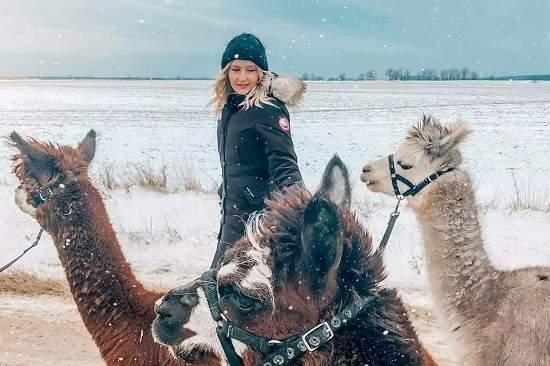 این مزرعه در نزدیکی تورنتو به شما امکان آلپاکا سواری میدهد